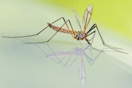 muggendodende-verf-pattyn-1